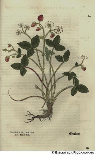 Fragaria maior et minor (Fragola), p. 853